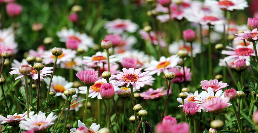 flowers-1-